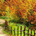 cropped-Beautiful-Autumn-Scenery-Wallpapers-01.jpg