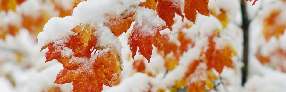 cropped-Maple-Leaves-With-Snow.jpg