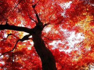 free-autumn-wallpaper