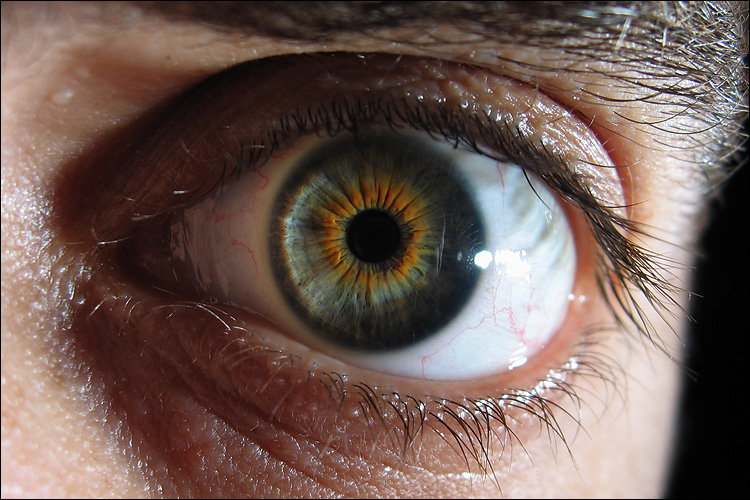 eye_macro_a95