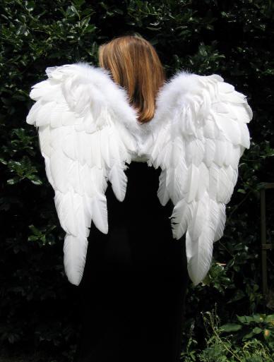angel_wings-2263