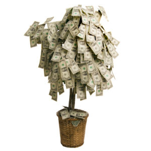 Money tree growing dollars on white background